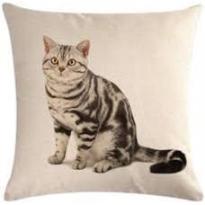 American Shorthair Grey Tabby Cushion