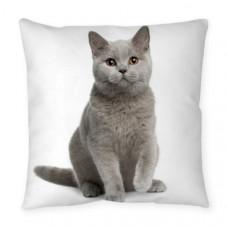 British Shorthair Kitten Cushion