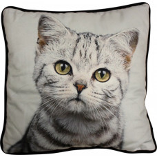 Cushion Petite Kitten